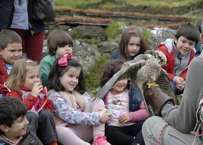 """Falconry exhibition """"Falcóns Galicia"""". Day of Museums 2016"""