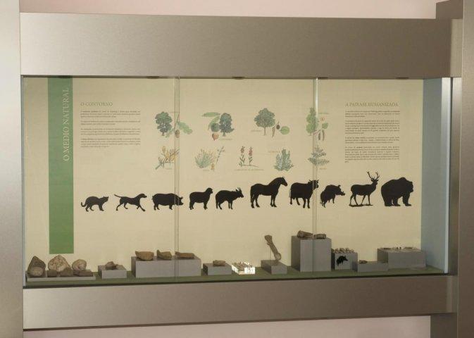Sala 1. Medio natural e hábitat. Detalle da vitrina 1